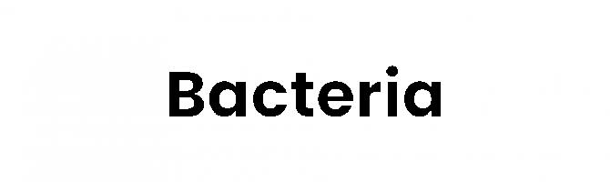 Bacteria Text